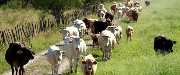 La genética como herramienta para mejorar la productividad de crías de ganado