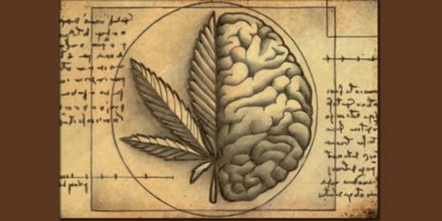 Principios activos del cannabis: Hablemos un poco de historia