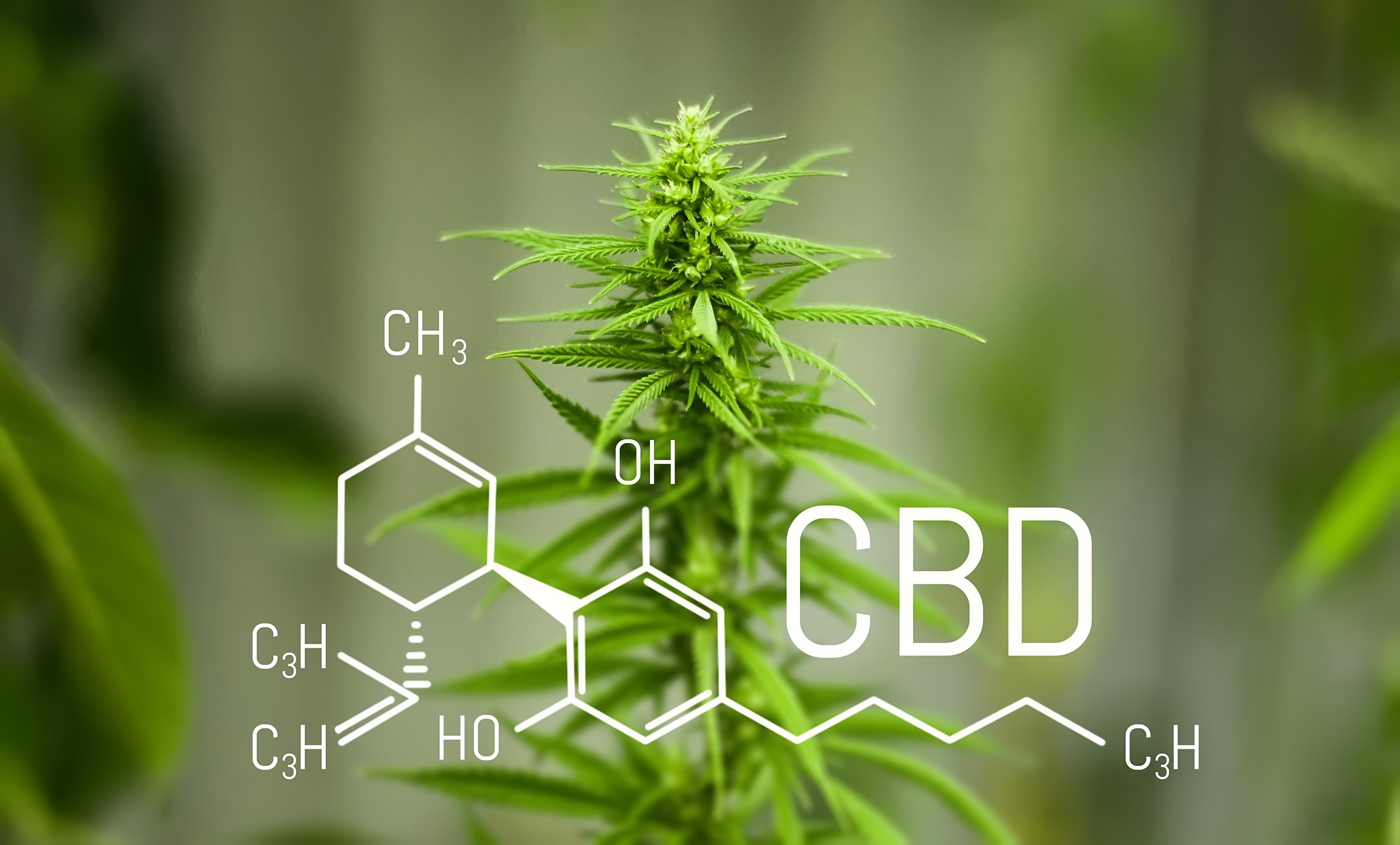 Principios activos del cannabis: Lo bueno y malo de la marihuana