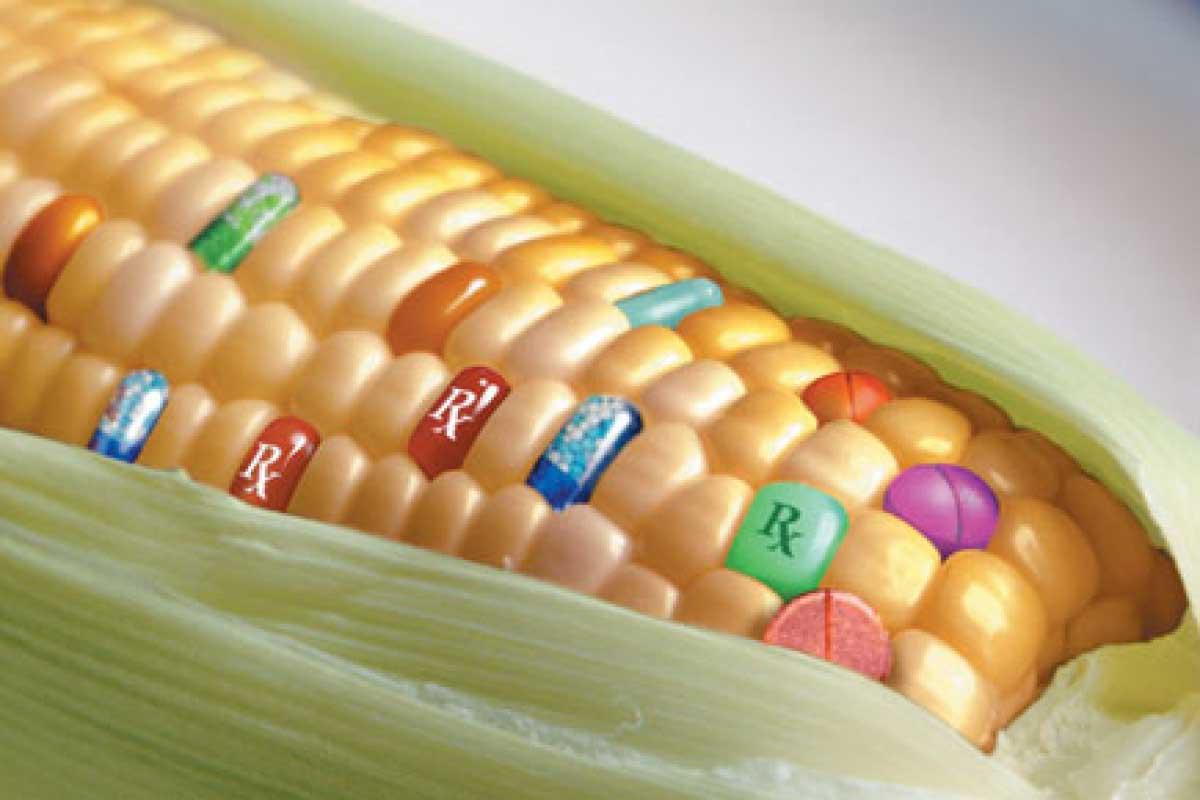 ¿La revolución de la agricultura? ¡Hablemos de Agrigenómica!