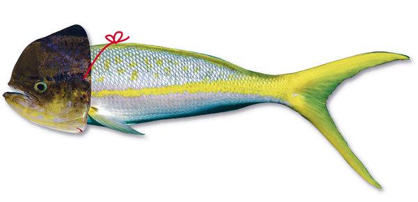 Sustitución de especies en el comercio de pescados en México y la secuenciación
